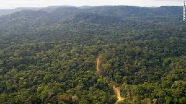 Arial view of Sambisa forest.